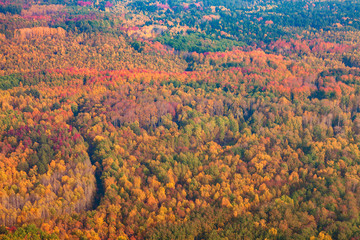 Top view perspective of autumn forest and river