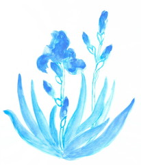 Watercolor drawing: plant iris in blue tones
