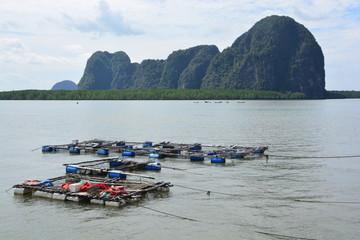 Fish farming , Fish cage in the sea