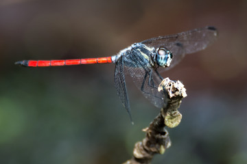 A dragonfly on a branch