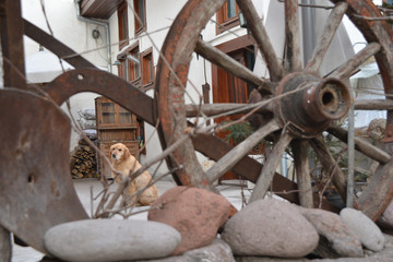 Wheel and dog