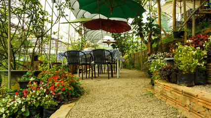Garden and  flower garden with roses in Backyard Garden