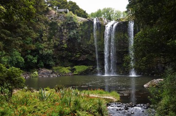magical waterfall scenery in vibrant nature near Whangarei
