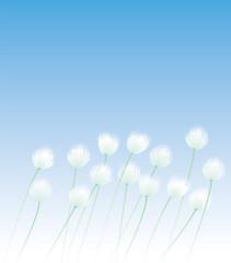 ワタスゲ 野の花