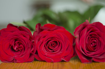 flowers of red roses