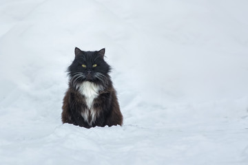 Black cat on the snow