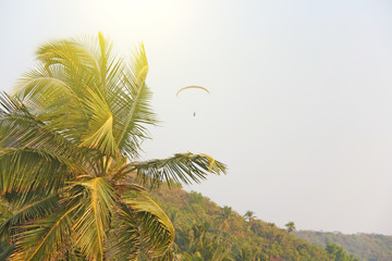 Beautiful tropical palm trees against the blue sea, sun and paraplane. Tropical and exotic landscape. Wallpapers with palm trees. Design with copy space
