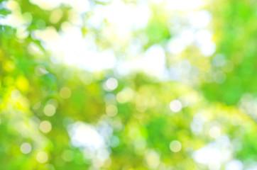 Bokeh green nature background. Beautiful green bokeh