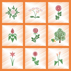 assembly flat shading style illustration plant flower paeonia chrysanthemum orhidaceae rosa calla aster narcissus linden