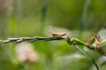 A grasshopper in the garden on a leaf