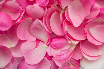 Beautiful delicate pink rose petals, many rose petals closeup. Beautiful background for greeting cards, wedding invitation, gift
