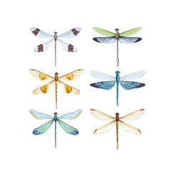 Watercolor dragonfly vector set