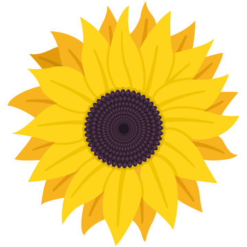 Sunflower with seeds vector flat icon isolated on white background.