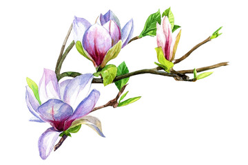Magnolia flowers on a branch painted in watercolor.