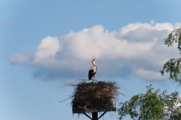 Storch klappert mit dem Schnabel - Wolken im Hintergrund