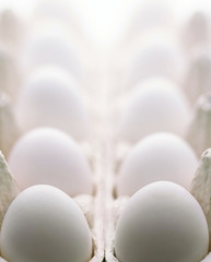 Chicken egg isolated over the white background