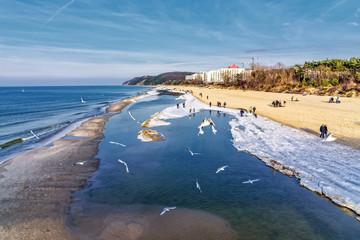 Strand Misdroy Ostsee Vogel
