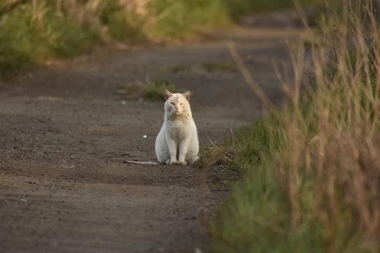 夕焼けの猫 何か食べるのちょうだい A sunset cat I have something to eat