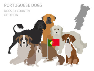 Dogs by country of origin. Portuguese dog breeds. Infographic template