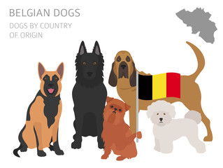 Dogs by country of origin. Belgium dog breeds. Infographic template