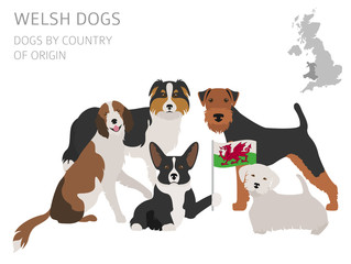 Dogs by country of origin. Walsh dog breeds. Infographic template