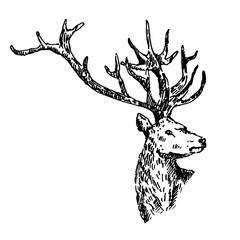 Hand drawn deer. Sketch, vector illustration.