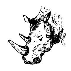 Hand drawn rhino. Sketch, vector illustration.