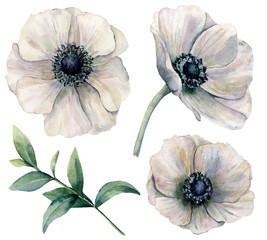 Watercolor white anemone set. Hand painted flowers with eucalyptus leaves isolated on white background. Natural illustration for design, print, fabric or background.