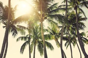 Palm trees against sunny tropical sky