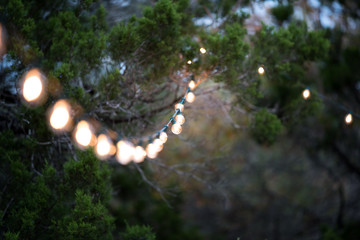 Garden lights strung in the trees
