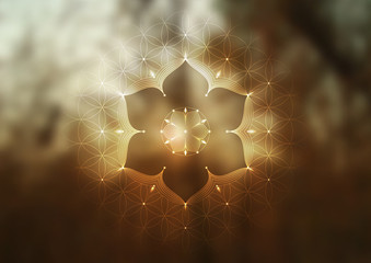 """Template of banner, horizontal format; Spiritual sacred geometry; """"Flower of life"""" and lotus on psychedelic natural forest photographic background; Yoga, meditation and relax."""