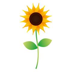 cute sunflower stem leaves nature image vector illustration