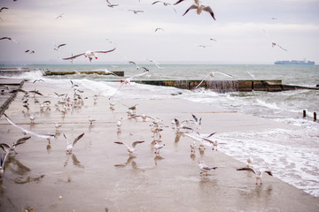 A flock of seagulls flies by the sea shore