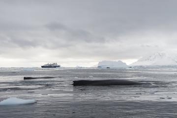 Humpback Whale logging