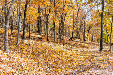Empty hiking trail through colorful orange yellow foliage fall autumn forest with many fallen leaves on path in Harper's Ferry, West Virginia