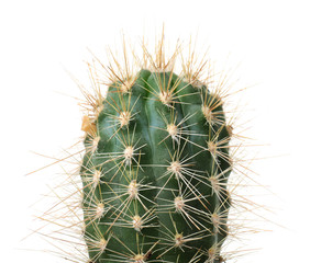 Photo sur cadre textile Cactus Beautiful cactus on white background