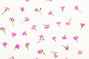 Pink flowers on white background. Flat lay, Top view. Flower texture.