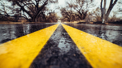 Closeup photo of yellow marking lane on wet asphalt road in forest