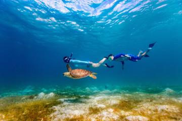 Fototapeta Family snorkeling with sea turtle obraz