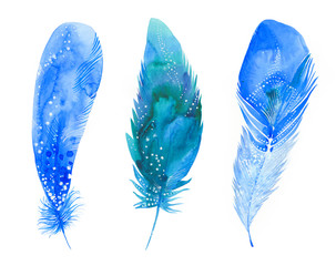 three blue feathers