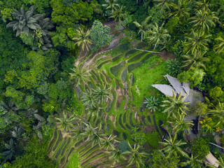 Incredible green rice fields, aerial view
