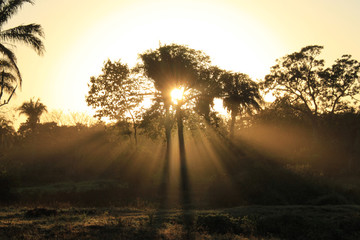 Sunburst behind Tree with Rays Breaking Through the Foliage. Pantanal, Brazil