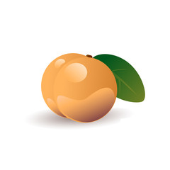 Peach fruit vector illustration