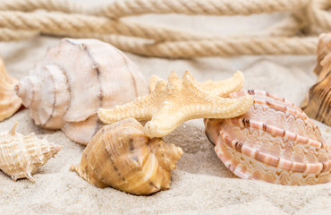 Seashells with rope on the sand. Summer background.