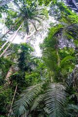 Baumkronen Dschungel