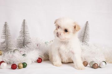 Christmas Pup 2
