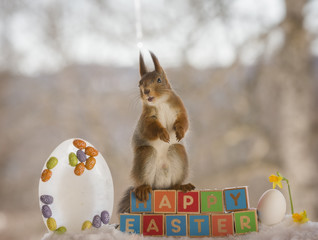 red squirrel on words happy easter and a daffodil