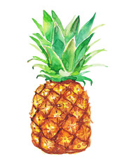 Pineapple  on a white background. Watercolor