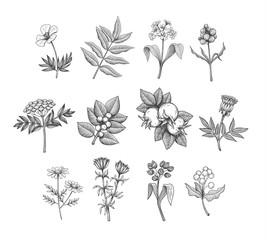 Vector Line Art Plants