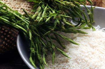 Humulus lupulus Risotto con gli urticions Cucina italiana Aspargina Wild hop shoots Italian cuisine